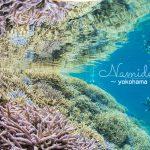 奇跡の海!沖縄 西表島ダイビングツアー!