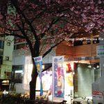 ショップの前は八重桜の桜並木☆