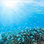 ケラマ諸島がテレビで放映!潜りに行きたい!