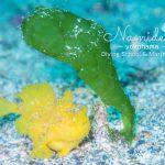 富戸の海は穏やか!ヨコバマは沢山の海の生き物!