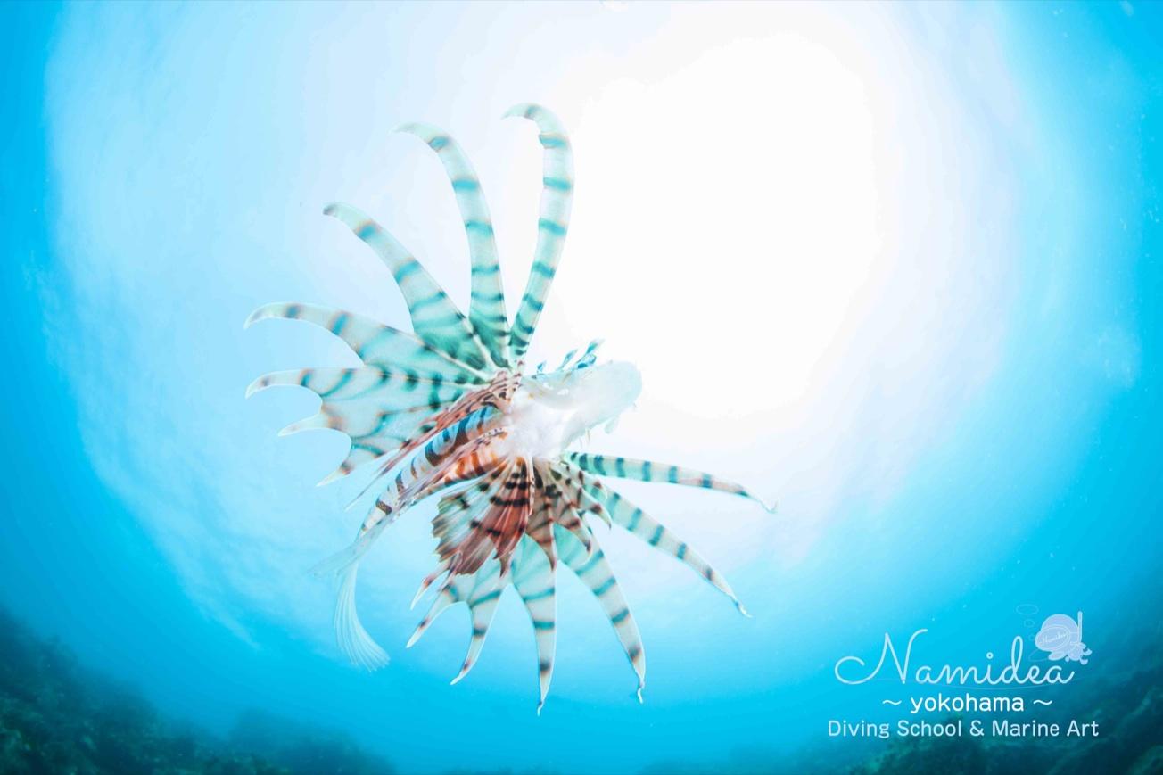 不思議な海の生き物