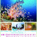 GWは伊豆大島ダイビングツアー開催!