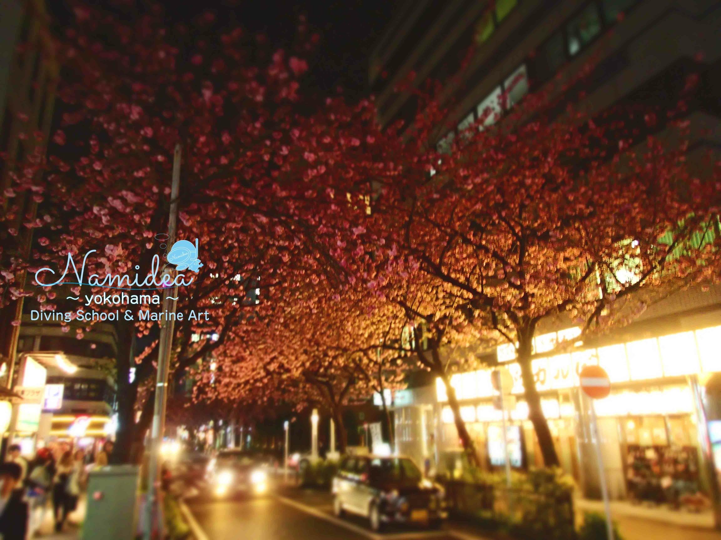 横浜 関内の桜