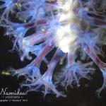 オリンパスTG−3の顕微鏡モードで水中撮影!