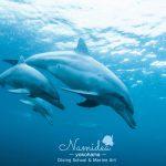 伊豆諸島の利島はなんと日帰りでイルカに会える!