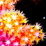 神奈川新聞花火大会!水中にも花火のような景色が!