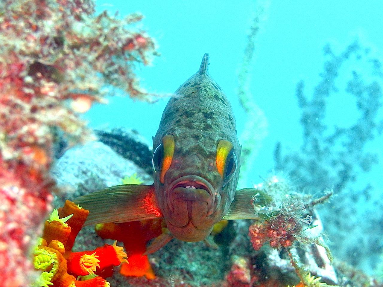 大瀬崎の魚