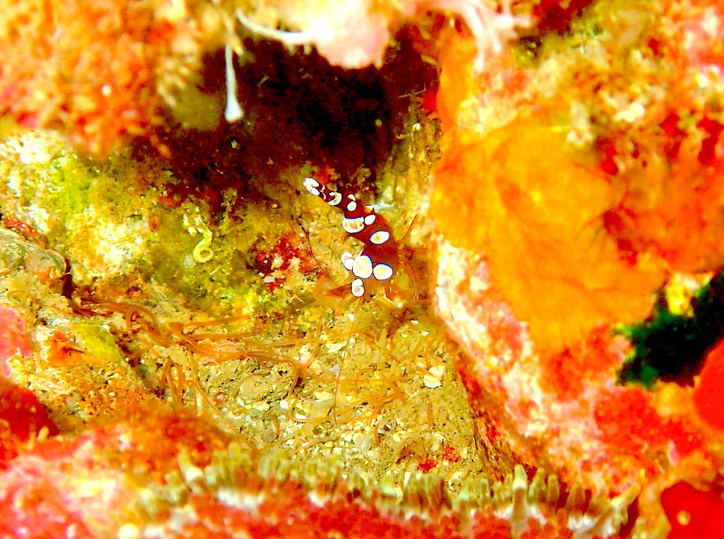 浮島はウミウシパラダイスでマクロDAY