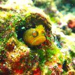 ハロウィンは江の浦で体験ダイビングとファンダイビング☆