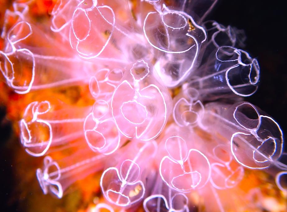 ライトを使った水中写真