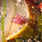大瀬崎の海でダイビング!初めてのノトアリモウミウシ!☆