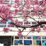 春スタート☆横浜のお店の前は桜が満開!