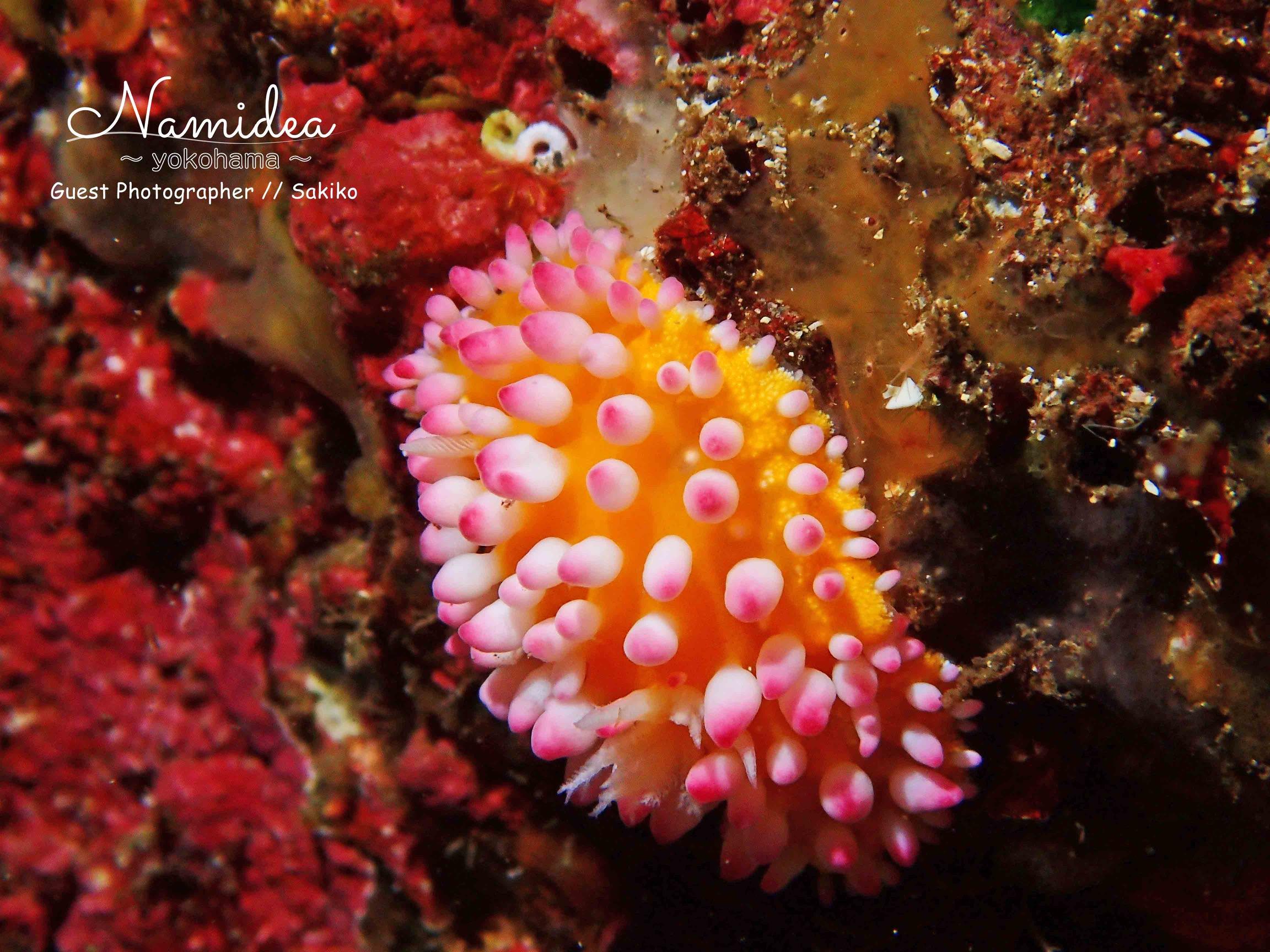 カラフルな海の生き物