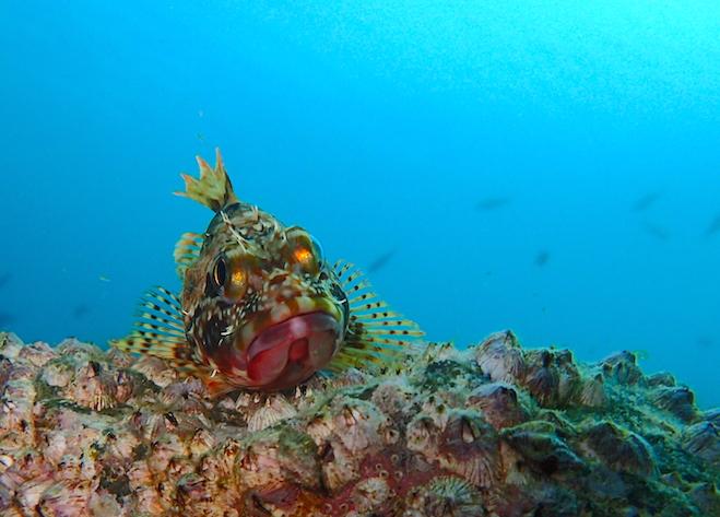 魚を正面から撮影