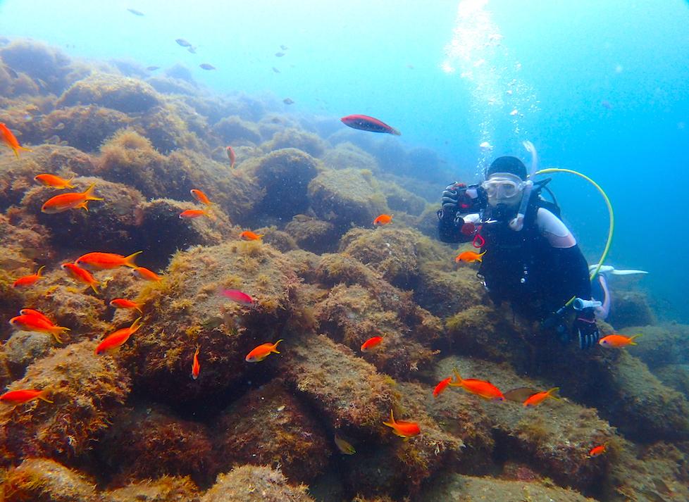 井田の海の生き物