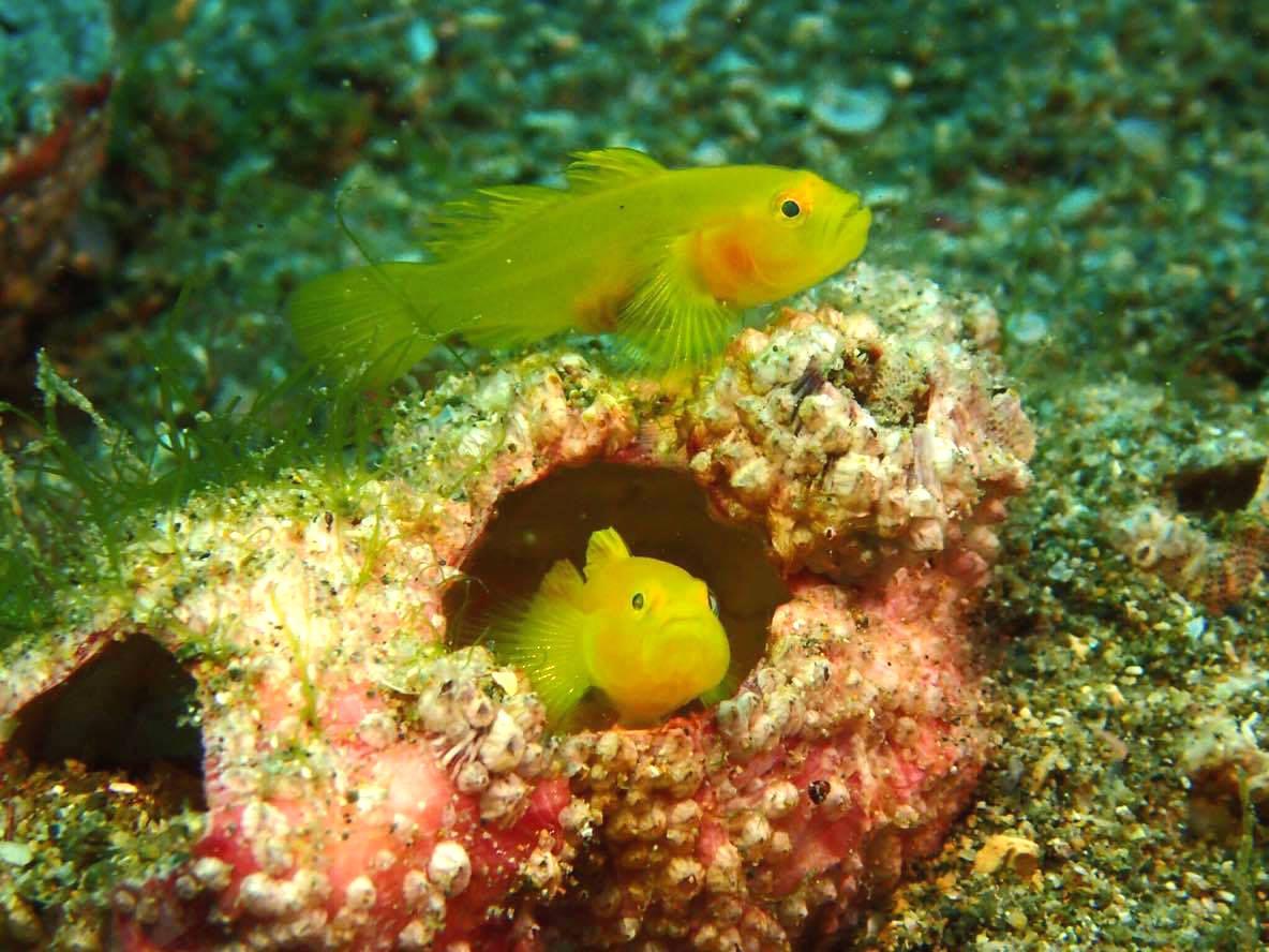 可愛い海の生き物