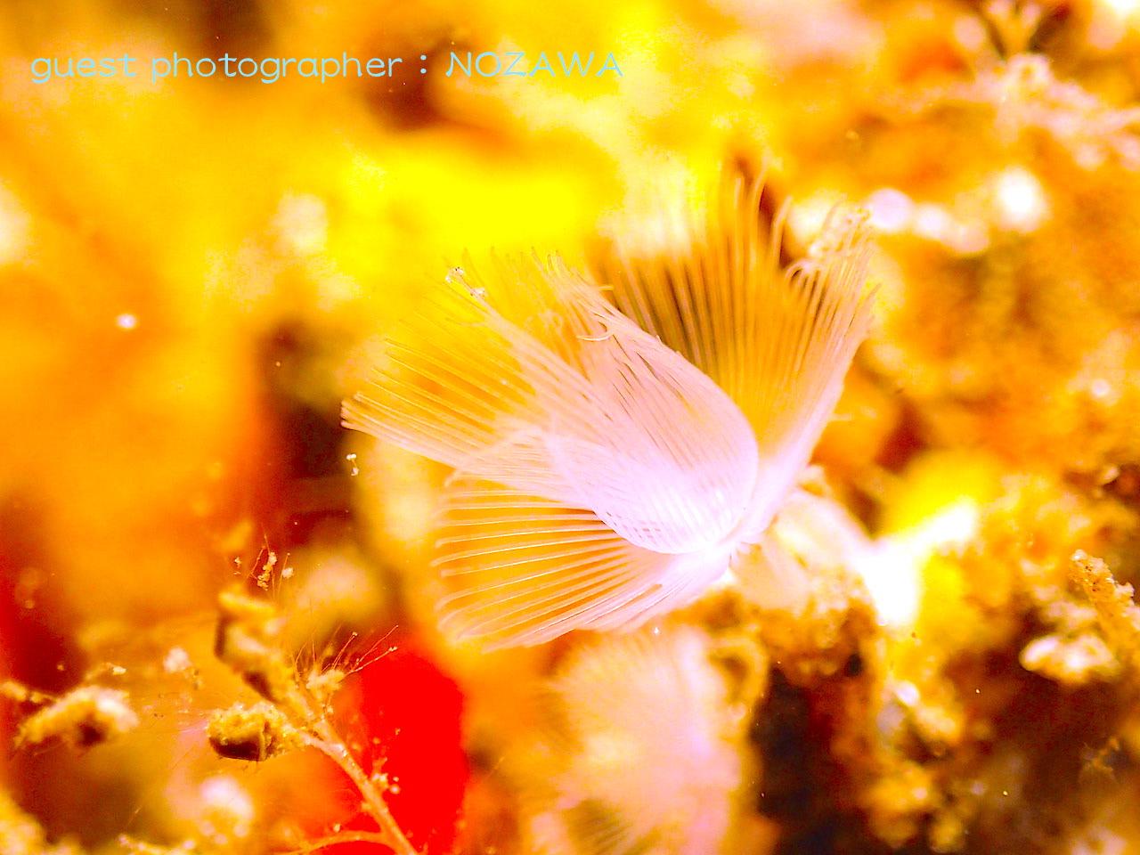 神秘的な海の生き物