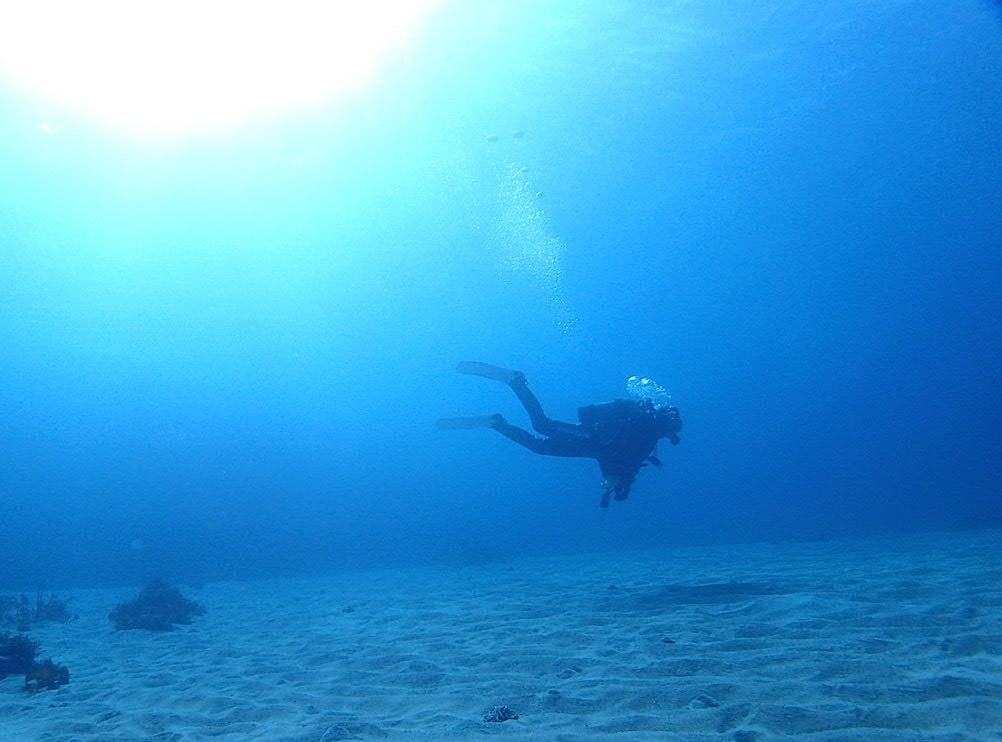 須崎でダイビング