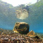 いろいろな水中世界!魅了され続けております!!