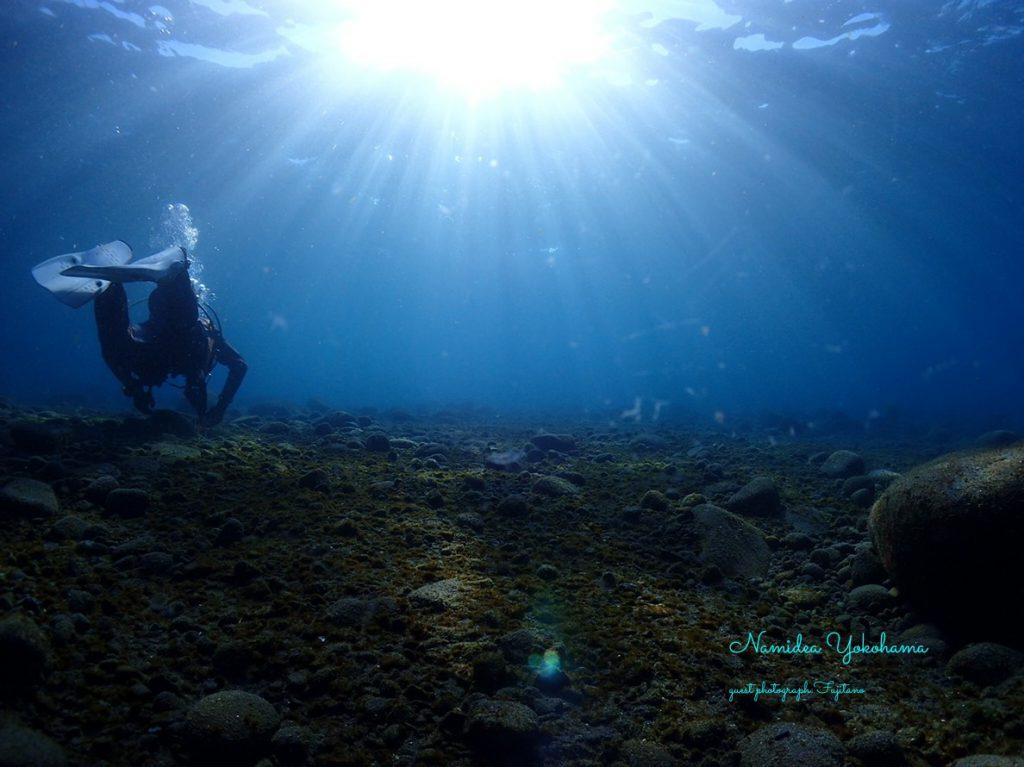 新年初潜りツアー:浅場はまるで淡水のような透きとおる海水