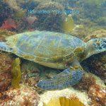 ウミウシは土管漁礁だけじゃない!!益々面白くなってきました!