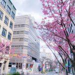 あっという間の週末!桜通りの桜も咲き始めましたー☆