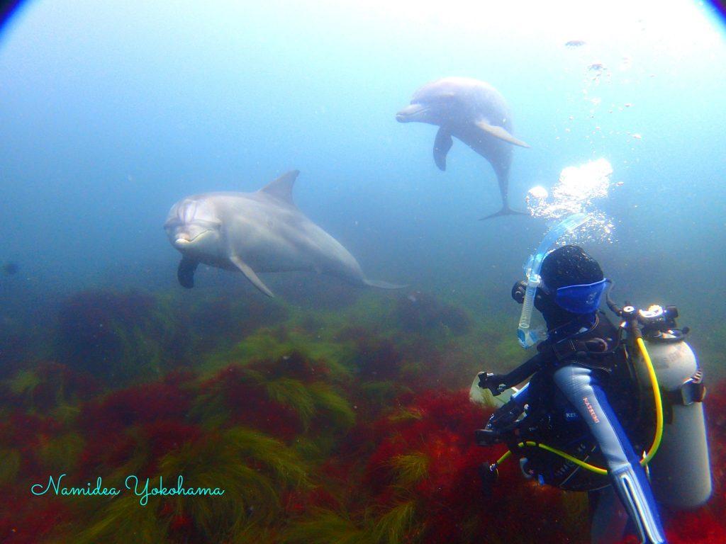 ナミディア平日リクエストツアーは初島へ!イルカと一緒に!!!