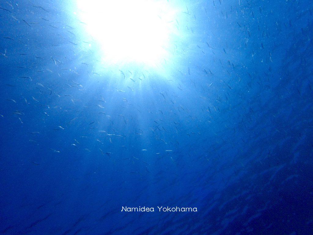 Namidea Yokohama 真っ青なブルーの海初島