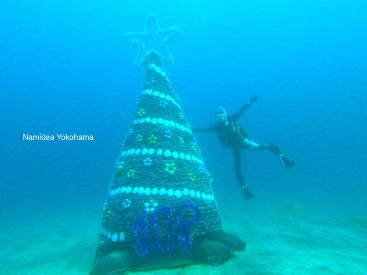 Namidea ダイビング 伊豆海洋公園のクリスマスツリー
