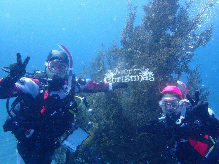 ナミディア 横浜 福浦にもクリスマスツリー