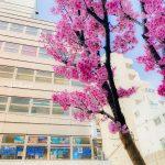 4/5(日) 皆様のお陰で6周年!ナミディア周年パーティー開催!!