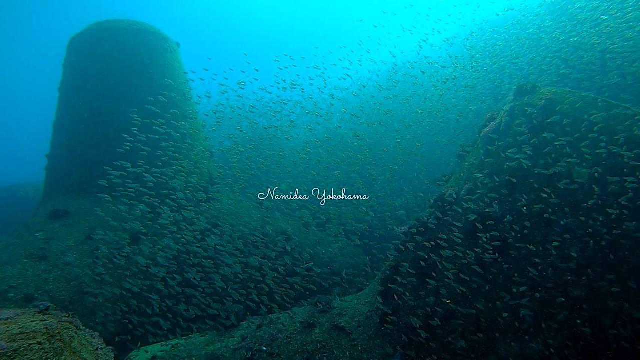 テトラポット周辺は魚が大群