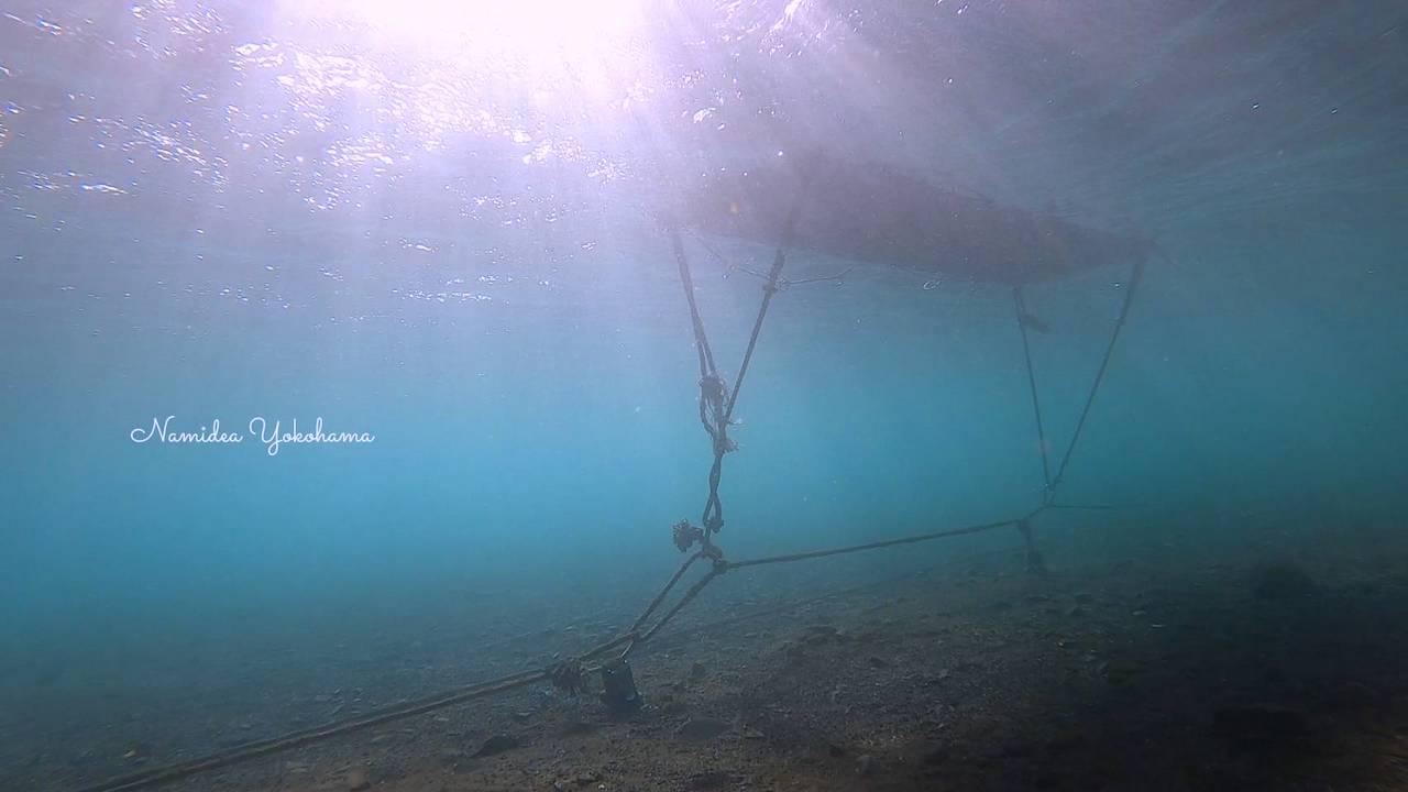 大瀬崎湾内 クラゲは減っていました