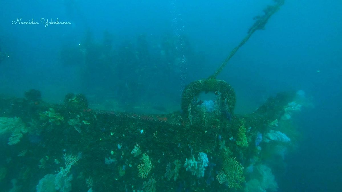 熱海 沈船ダイビング