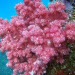水中で咲く桜のようでした!!