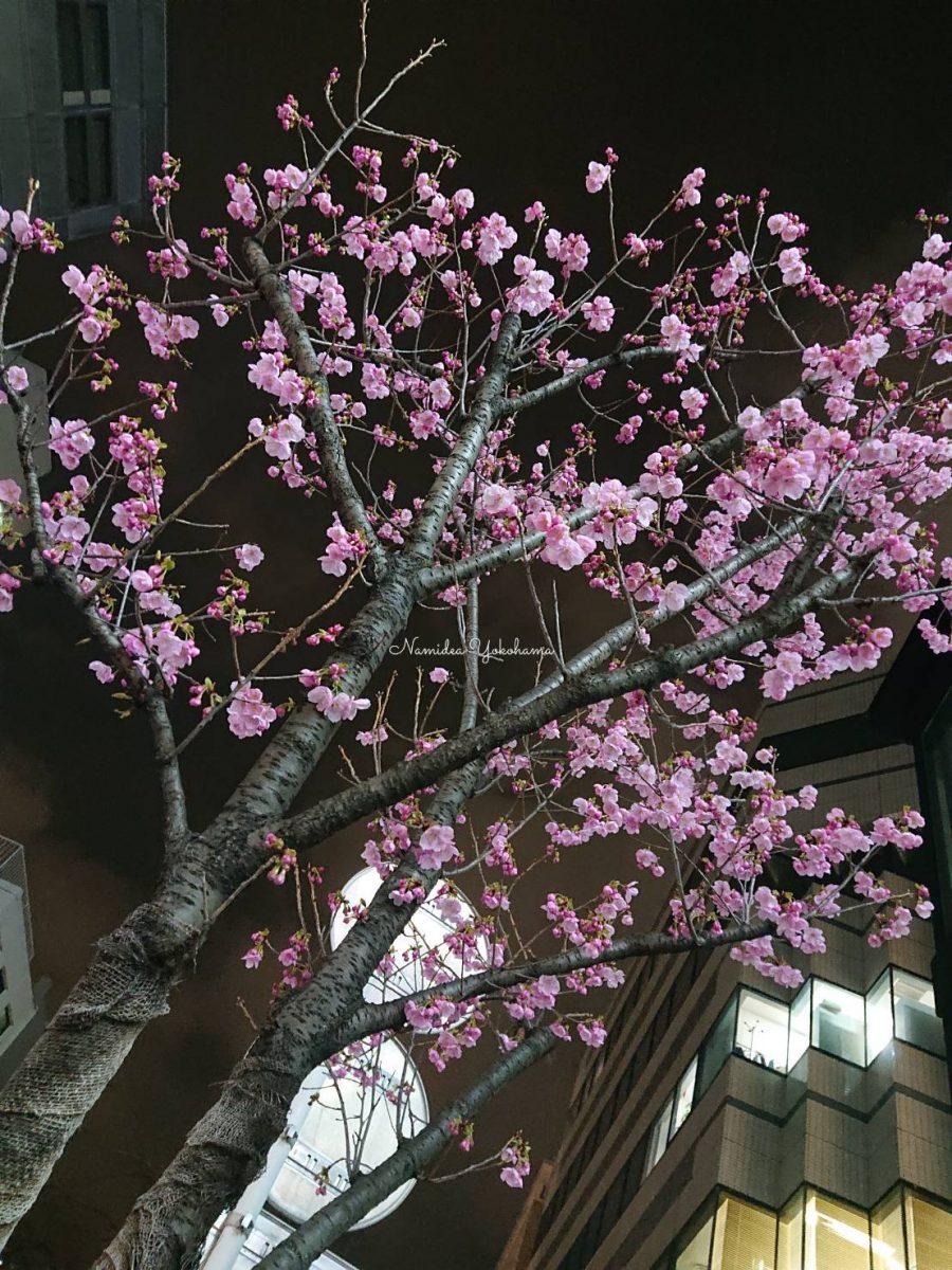 2021春 桜が咲きました